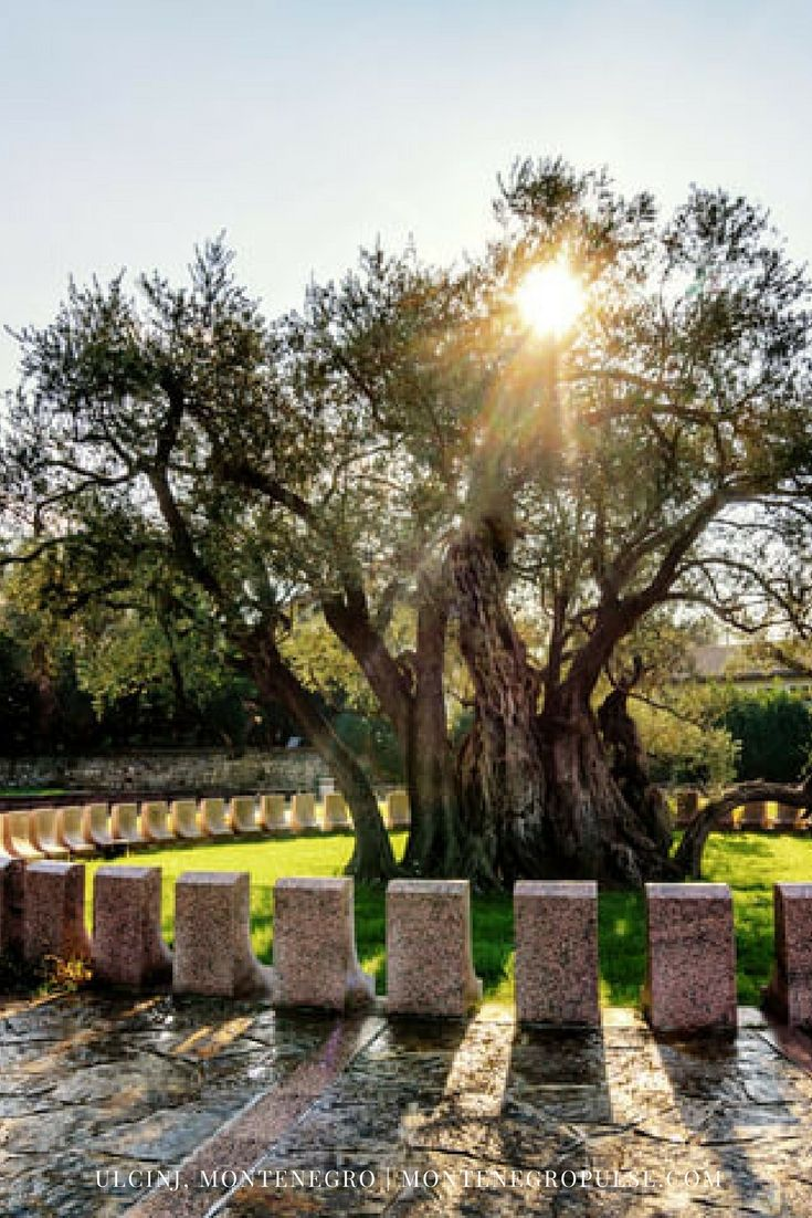 Visit the oldest olive tree in the world - over 2,000 years old - and other fascinating sights in Bar, Montenegro. Plan your perfect Montenegro holiday!