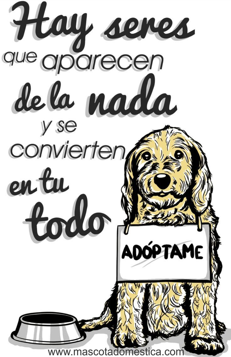 www.mascotadomestica.com