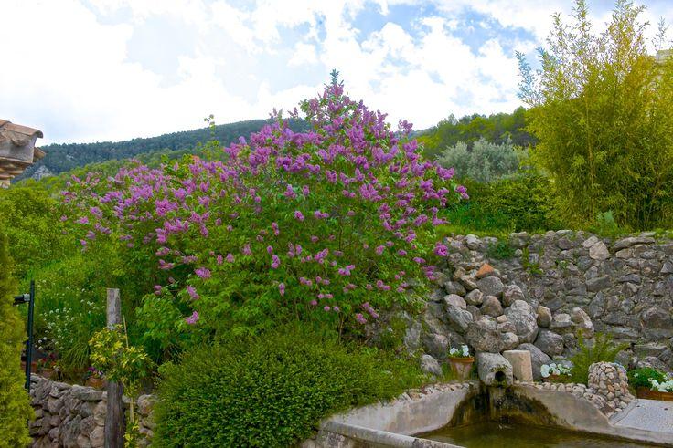 28 best flores y jardines images on pinterest gardens for Jardines pequenos con encanto