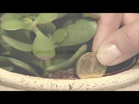La PLANTA que da FELICIDAD A TU HOGAR - YouTube