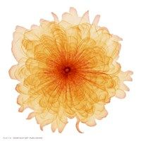 Framed Orange Chiffon