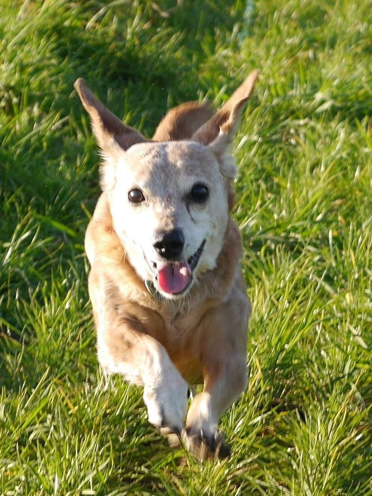 Hunde Foto: Sabine und Lucy - 15 jährige Dackellady in Motion.jpeg Hier Dein Bild hochladen: http://ichliebehunde.com/hund-des-tages  #hund #hunde #hundebild #hundebilder #dog #dogs #dogfun  #dogpic #dogpictures