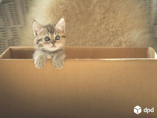 Jede Onlinebestellung macht durchschnittlich eine Katze glücklich.