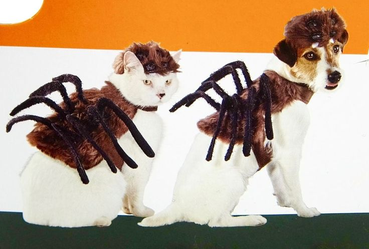 Dog Spider Costume for Halloween Two Pieces Size XS #Target