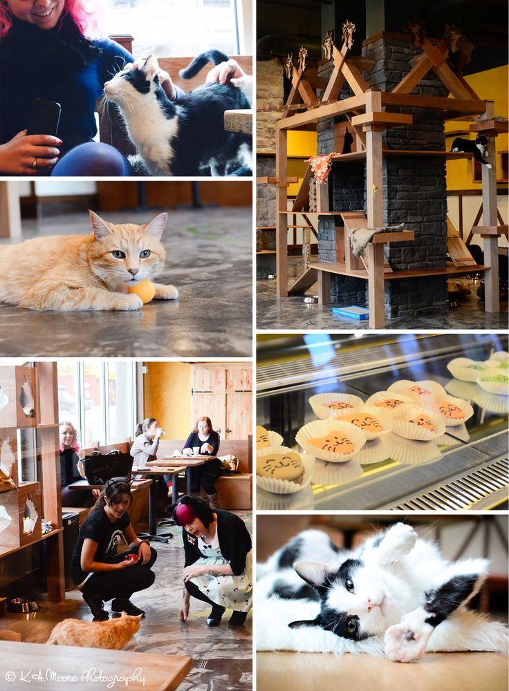 25 best ideas about cat cafe on pinterest coffee stores