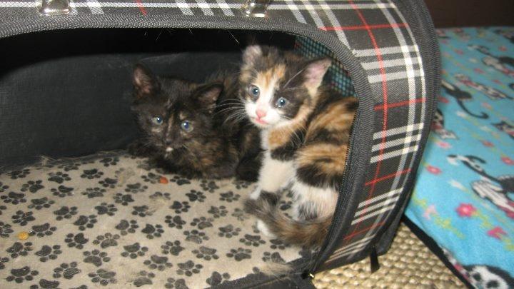 Albergue para madres y sus gatitos recién nacidos.