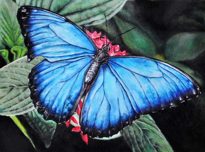 "Lucrarea lui Ștefan  ""Butterfly"" - Prismacolor Premier Colored Pencils & Derwent Coloursoft on Daler Rowney Heavyweight paper A4  #magazinulartistilor #prieteniMA #coloredpencil #butterfly #romanianartists"