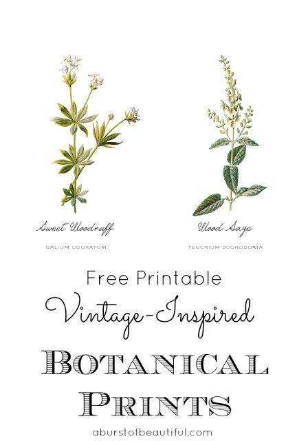 A Burst of Beautiful: Free Vintage Inspired Botanical Printables & Updated Powder Room