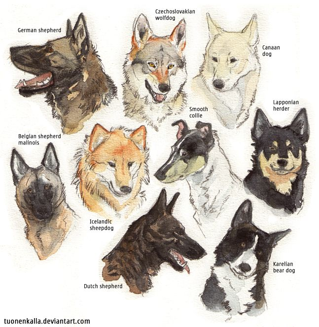 My favorite dog breeds + extra by Tuonenkalla... Big dogs to practice drawing!