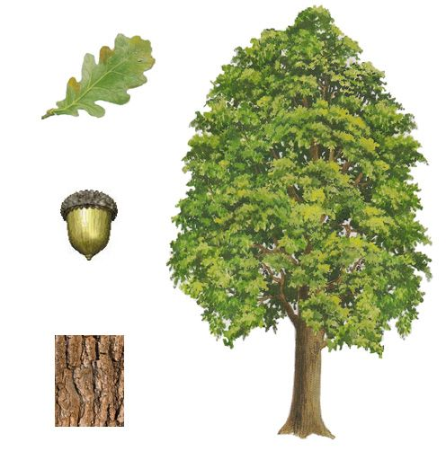 karty roční doby montessori - Hľadať Googlom