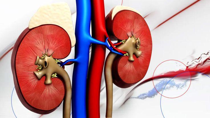 فحص بسيط ومبكر يجنب مصابي مرض الكلى مضاعفات خطيرة In 2021 Kidney Failure Treatment Kidney Failure 10 Things