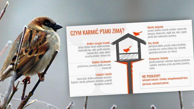 Czym zimą karmić miejskie ptaki?