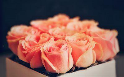 Scarica sfondi rose arancioni, rose, un mazzo di rose, bellissimo bouquet, bouquet gratuito