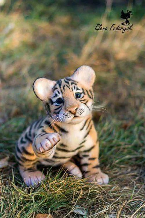 Bébé Tigre <3 <3 <3  These creatures are soo cute