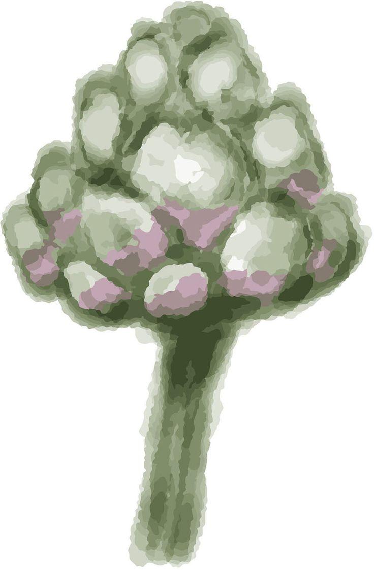 Artichoke. Watercolour Illustration by Kate England.