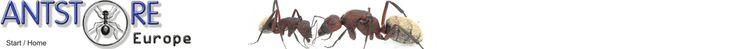 ANTSTORE - Ameisenshop - Ameisen kaufen