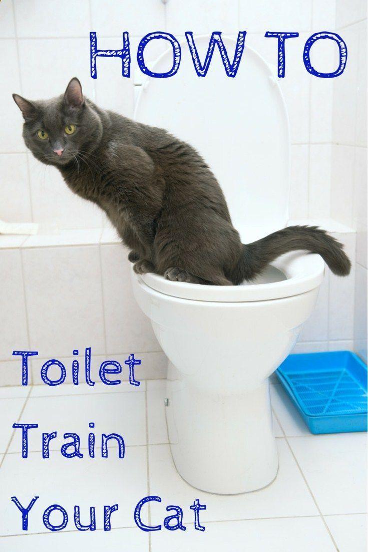 Multple Tips For Every Good Cat Owner Cat Toilet Training