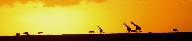 """""""Hai guardato i quadri da troppo vicino"""" disse. """"Perché non li sostituisci con i vasti orizzonti?""""   """"Perché no?"""" risposi.   """"Dove ti piacerebbe andare?""""  """"In Africa.""""  (B. Chatwin, Le Vie dei Canti) #travel #quotes"""