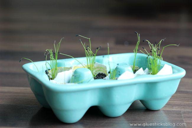 Egg Shell Seed Starters
