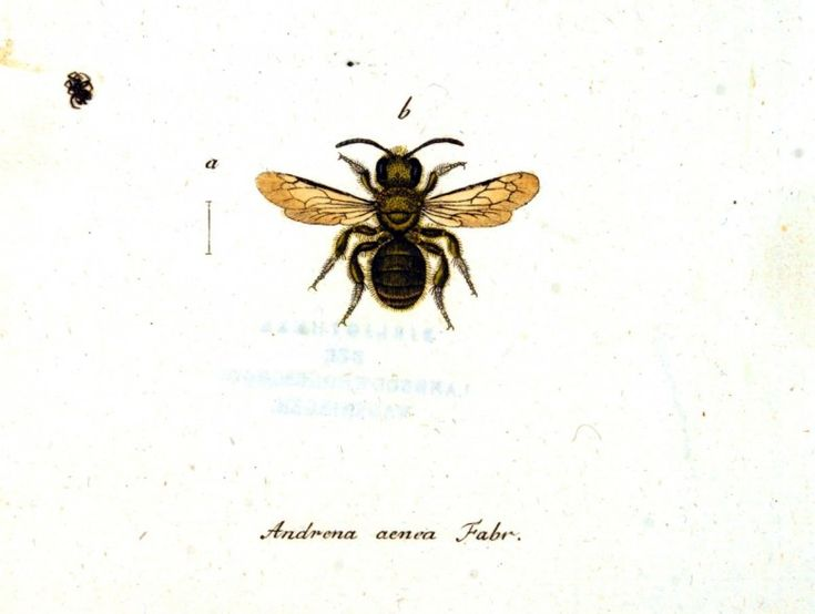 176 best clip art images on pinterest botanical drawings animal insect bee ccuart Choice Image