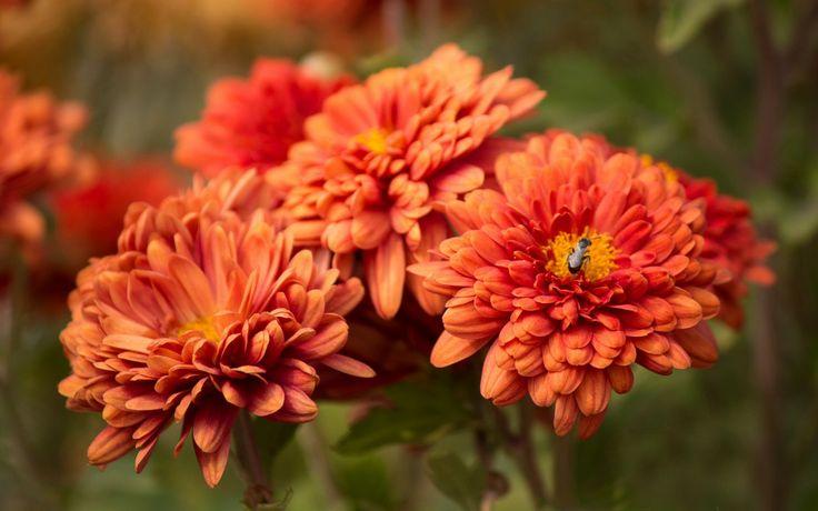 Bug Blossom