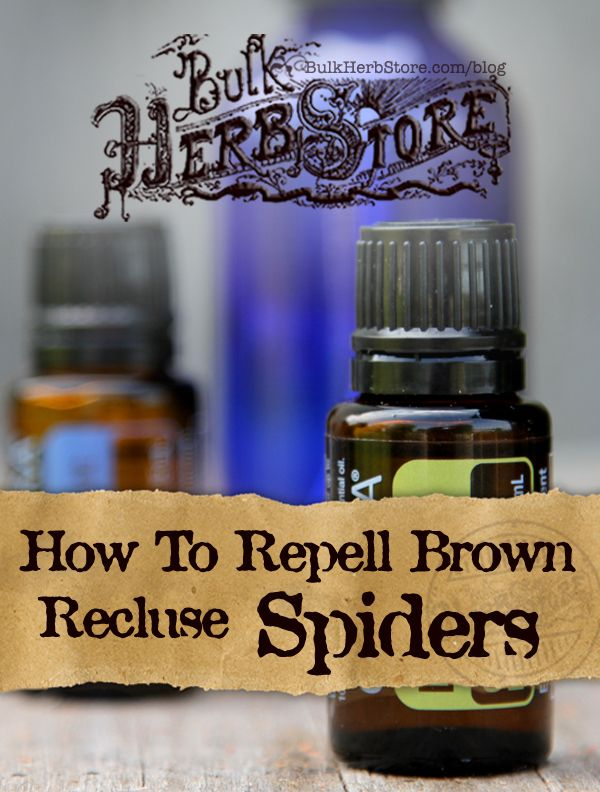 How To Repel Brown Recluse Spiders | BulkHerbStore.com/blog | Have brown recluse spiders in your area? Here's how to repel them naturally.