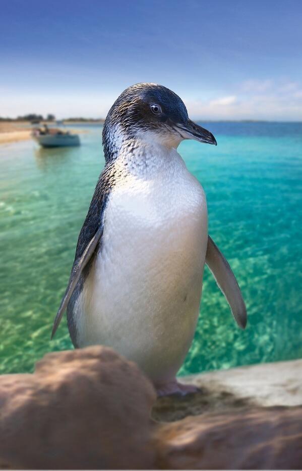Penguin Island, Perth, Australia.