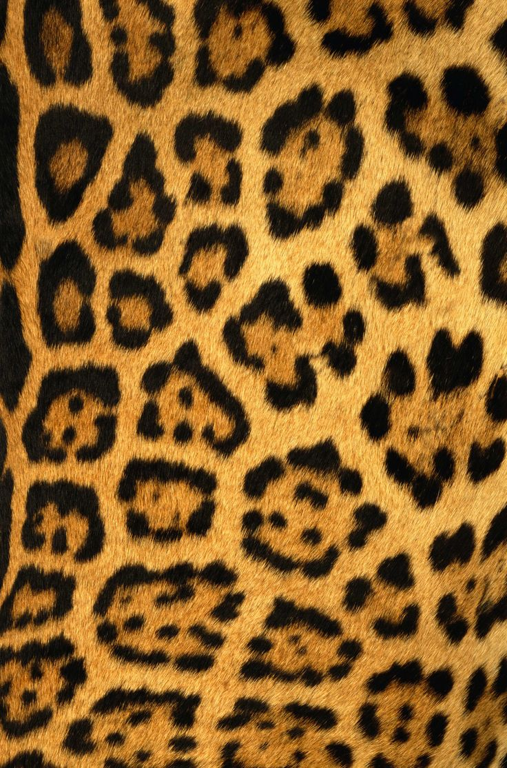 Animal Print Manicure: 17+ Best Images About Design