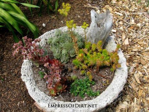 Broken bird bath? Plant it! | Hypertufa planter with succulents