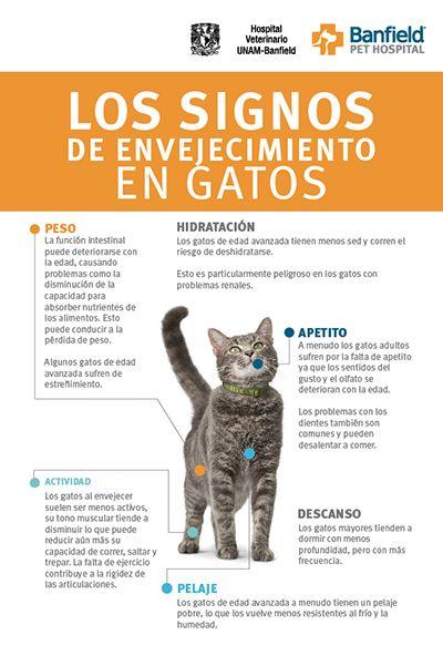Identifica signos de envejecimiento en tu #gato. #BanfiedTips #DueñoResponsable