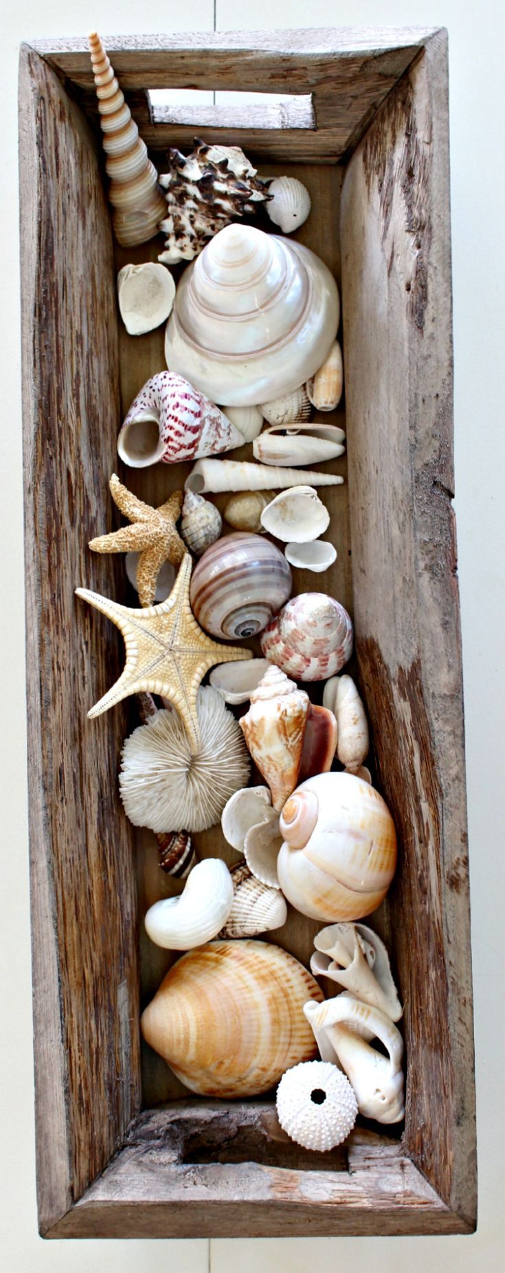 Seashells in Wood Trough for the perfect coastal centerpiece or unique addition…