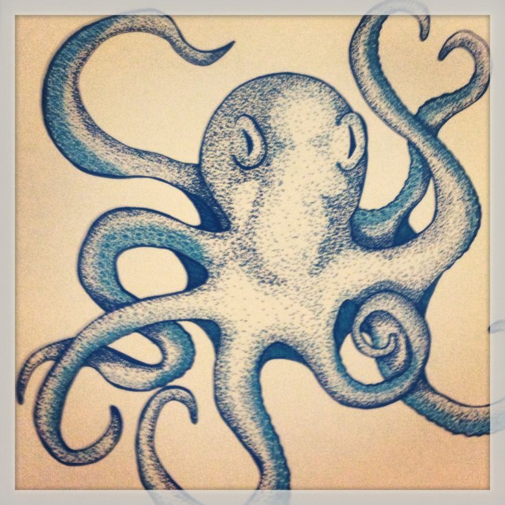 38 best Polvo images on Pinterest Octopuses Animals and Drawings