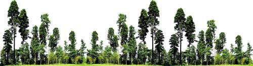 Щиты(биллборды) HQ с деревьями для Artlantis Render 5!