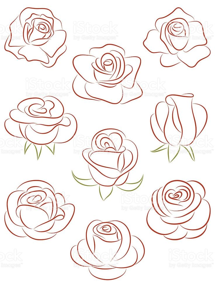 Set of roses. Vector illustration. royalty-free stock vector art