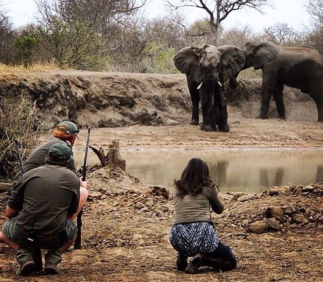 Here is a #BTS shot just before I captured the previous image I posted.  #Repost @kevinmaclaughlin・・・ Guiding @shannon__wild through the African Bush, what a great experience at Africa on Foot #guiding #trails #krugerpark #krugertrails #elephants #africaonfoot @sundestinations