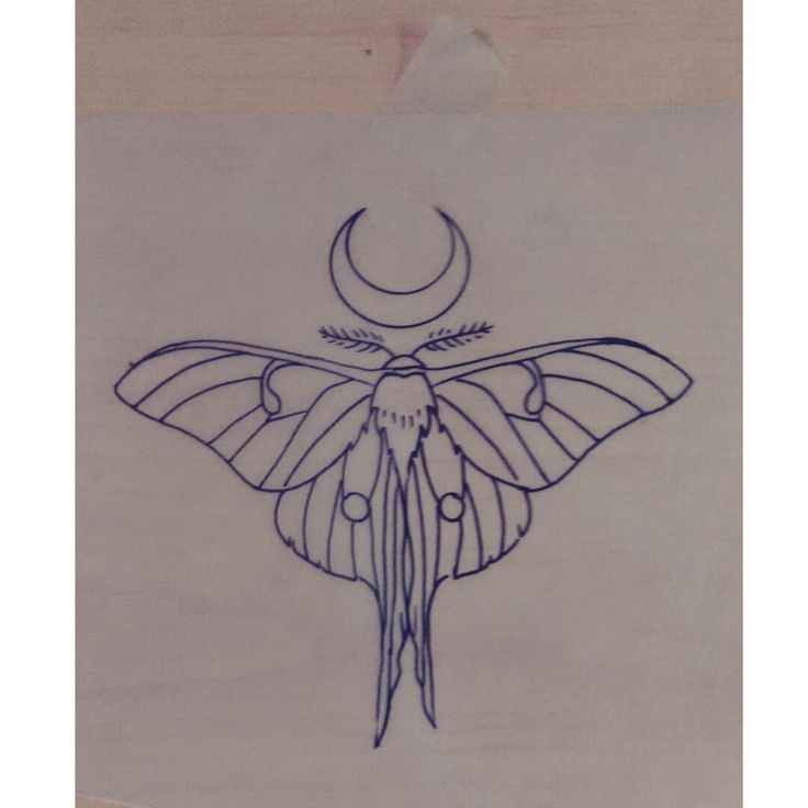 #luna #moth #drawing #by #Laura #Carney #tattoo #design #wow! at #Kiss of…