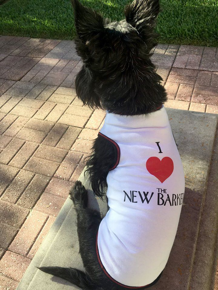 Check out our fun tees. The shirts are available in small, medium, large and extra large. We'll be raffling off the shirts for a $5 #donation during THE NEW BARKER+ Morgan Auto Group Just One Day Adopt-A-Thon on Sunday, June 11.