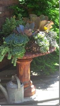 Patio Succulents