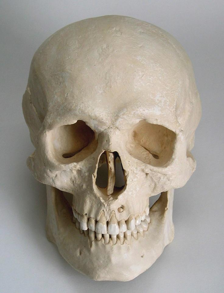картинки анатомический черепа объединить характеристики всех