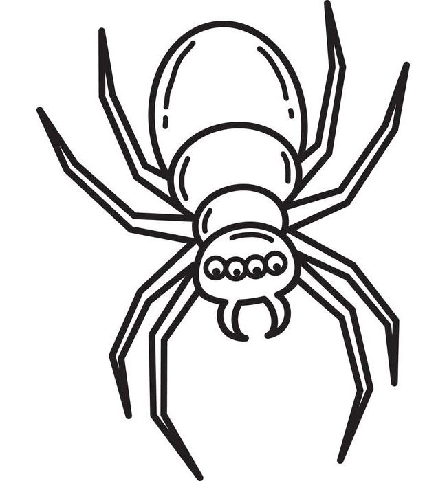 Visit The Post For More Spider Web Drawing Free Stencils Animal Templates