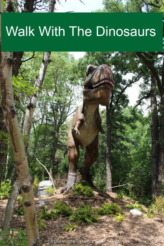 Walk with the dinosaurs at the Dinosaurs Alive exhibit at Assiniboine Park Zoo in Winnipeg, Manitoba