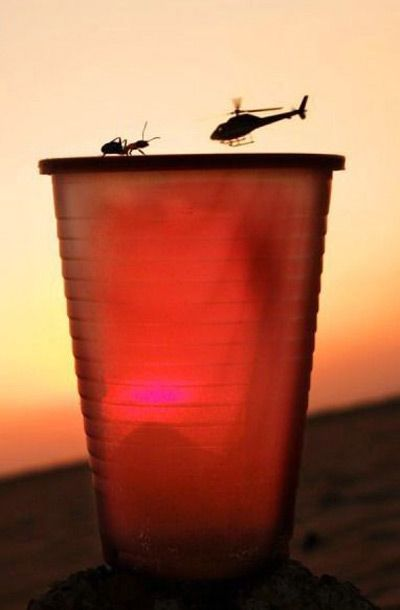 Heli, Ant and the Cup