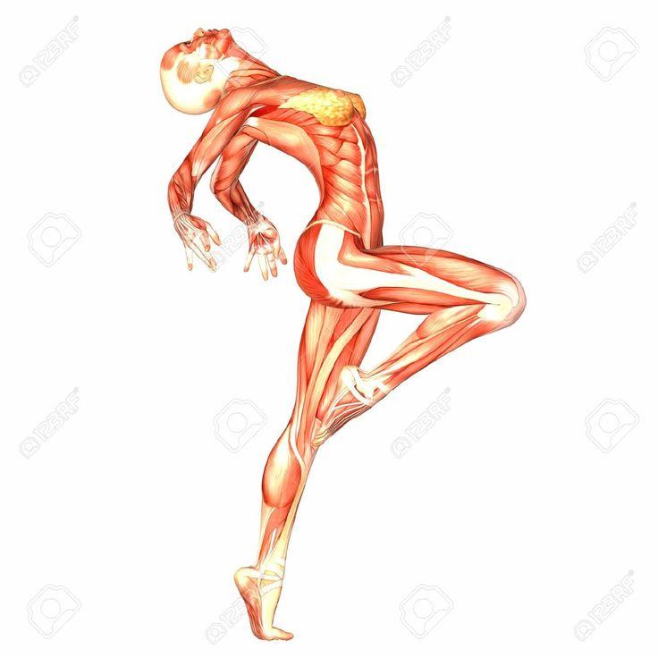 Ilustración de la anatomía del cuerpo humano femenino: Los músculos. Fondo blanco.