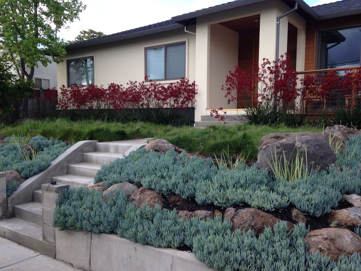 front garden with simple drought tolerant planting of