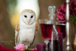 Ulula - блог о сове Сорене и фотографии