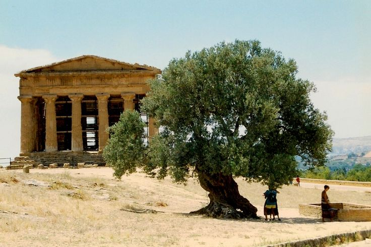 Temple of Concordia - Greek archeological site - Agrigento