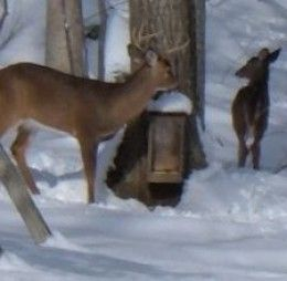DIY Plans with step-by-step instructions for building a Deer Feeder