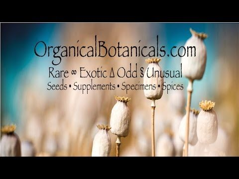 http://OrganicalBotanicals.com - Papaver Somniferum Poppies and Seeds @organicbotanics