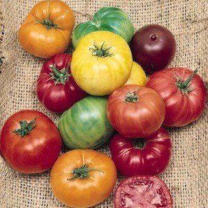 Beefsteak Tomato Heirloom Certified Organic Seeds -  they will come out soooo beautiful if you plant them right now. Perfect time of year to start planting these. Invest in your family's health. Do not serve GMO vegetables on your kitchen table.