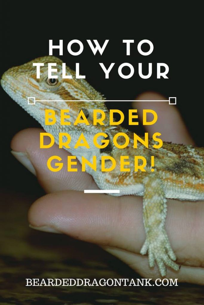 Best 25 Bearded Dragon Food Ideas On Pinterest Bearded